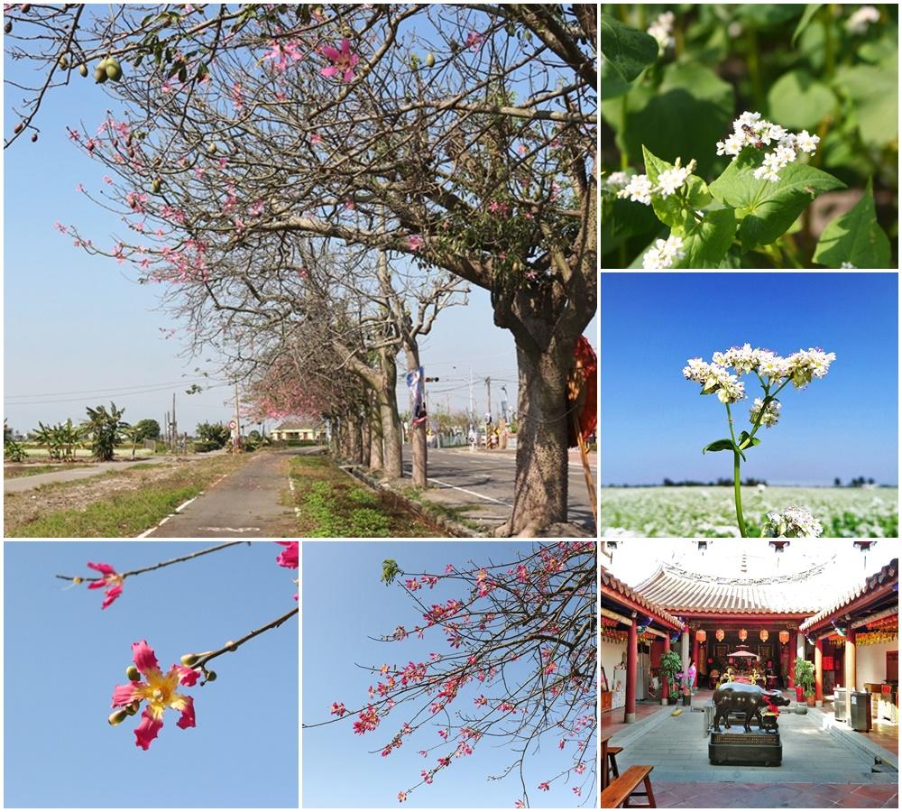 彰化旅遊│二林景點:台灣酒窖、蕎麥花田、美人樹步道、三級古蹟仁和宮